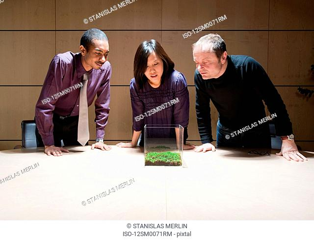 Team of three observing green plant