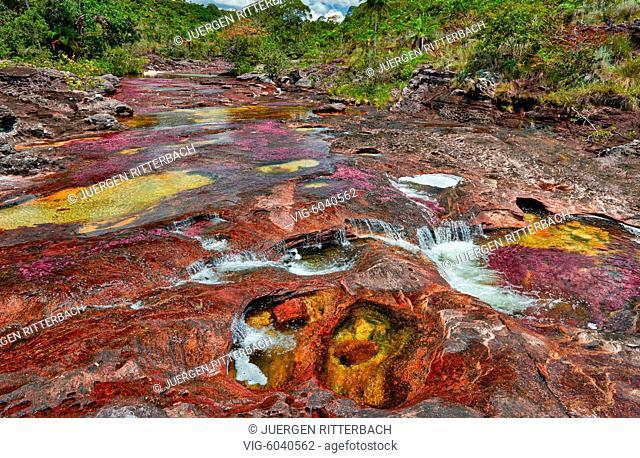 Cano Cristales called the River of Five Colors or the Liquid Rainbow, Serrania de la Macarena, La Macarena, Colombia, South America - La Macarena, Meta