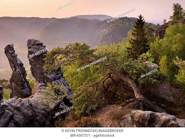 Trees and rocks in morning light, Saxon Switzerland, Elbe Sandstone Mountains, Saxony, Germany