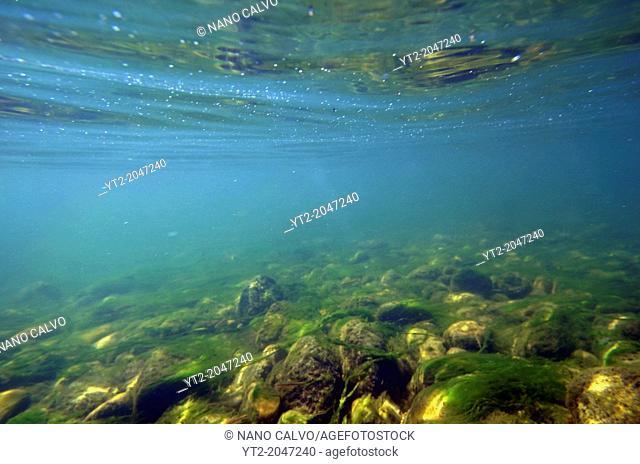 Underwater view of Sella River, Asturias, Spain