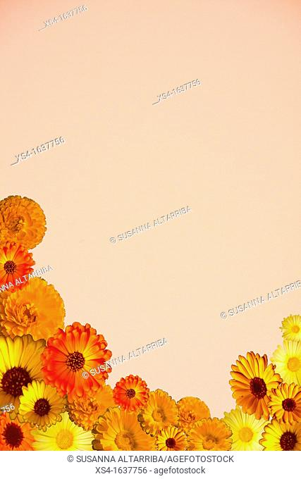 Notepaper, pink paper with Calendulas