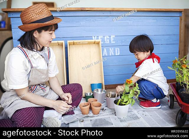 Japanese woman wearing hat and boy sitting outside a farm shop, planting flowers into flower pots