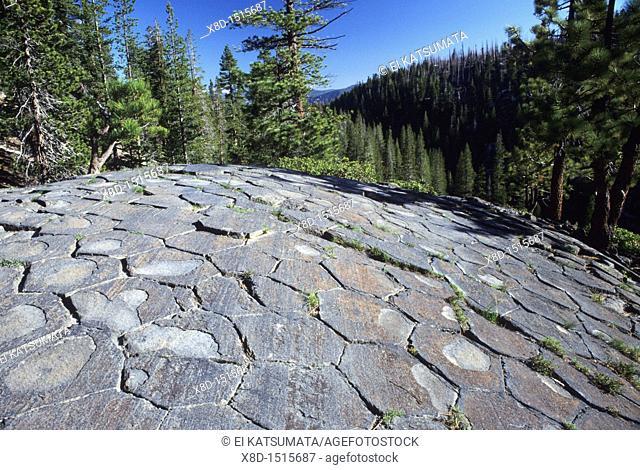 Glacially polished basalt columns, Devil's Postpile National Monument, California, United States of America