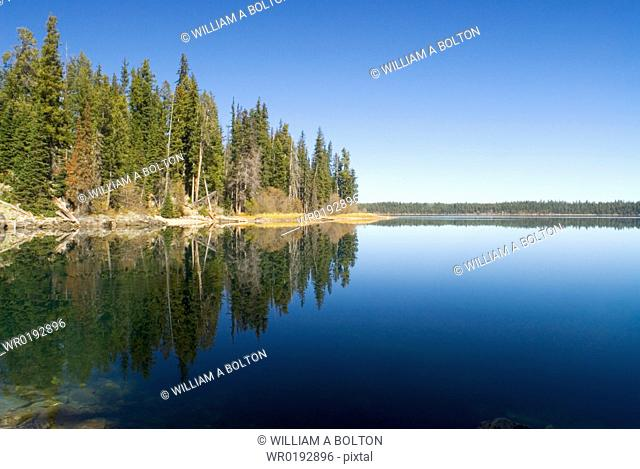 Pine trees reflected in Jenny Lake, Grand Teton National Park, Wyoming, USA