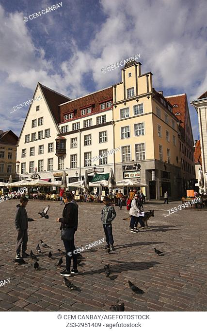 People feeding birds in front of the colorful houses at the main Square Raekoja Plats, Tallinn, Estonia, Baltic States, Europe