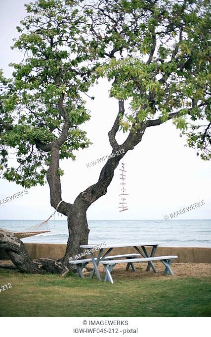Benches near tree at seashore