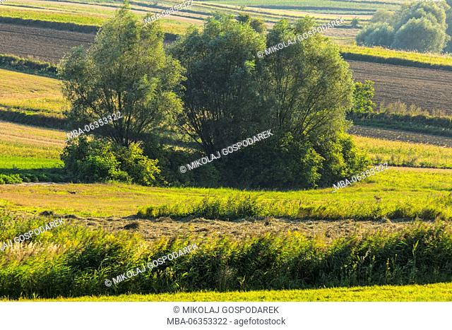 poland village,field poland,ground,country,travel europe,travel poland,europe,poland,polen,polska,swietokrzyskie,ponidzie,agriculture,area,classical,fields