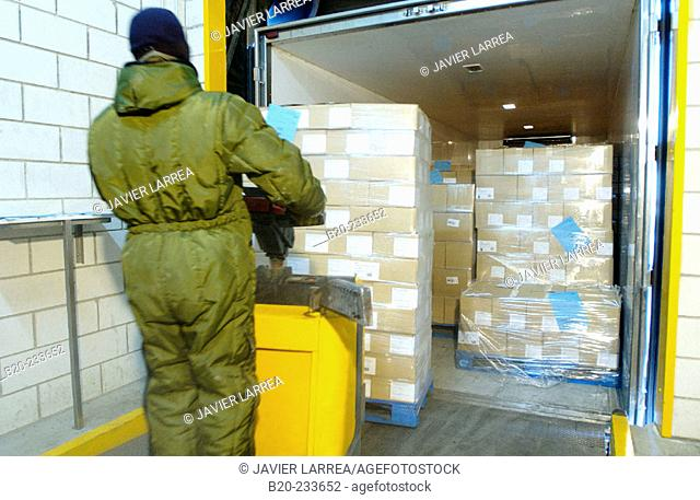 Frozen food industry, cold-storage area, loading a truck. Navarre. Spain