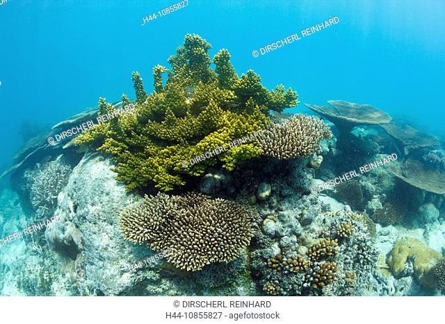 10855827, Corals, Bikini Lagoon, Marshall Islands