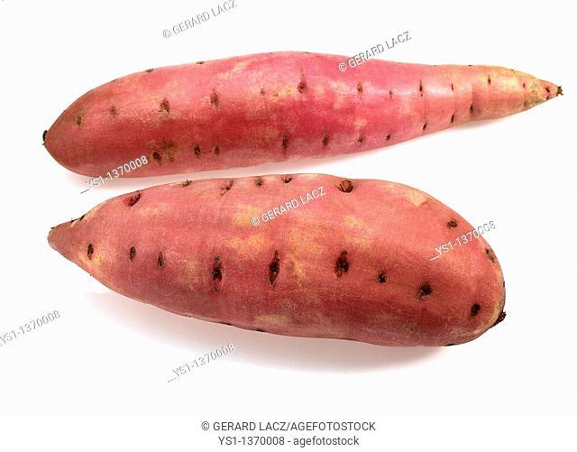 SWEET POTATO ipomoea batatas AGAINST WHITE BACKGROUND