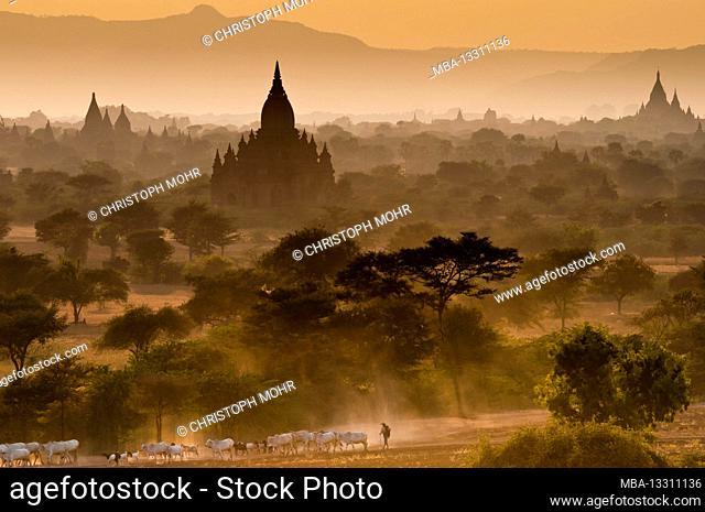 Pagodas in Old Bagan
