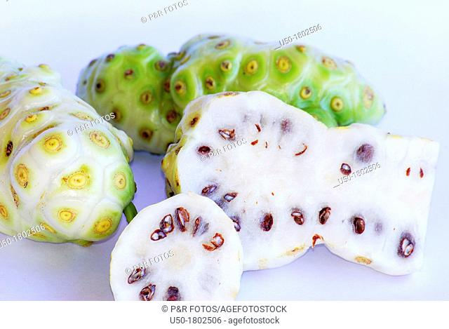 Fruits of noni, Morinda citrifolia, Rubiaceae  2012