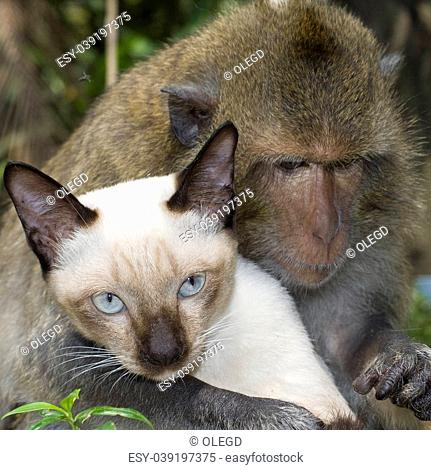 Monkey is friends with domestic cat