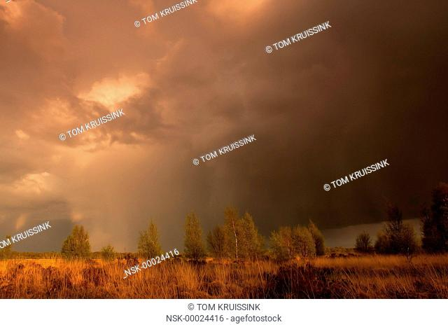 Rain on the Engbertsdsijksvenen a peatmoor in the east of the Netherlands, the Netherlands, overijssel, Vriezenveen, Engbertsdijksvenen