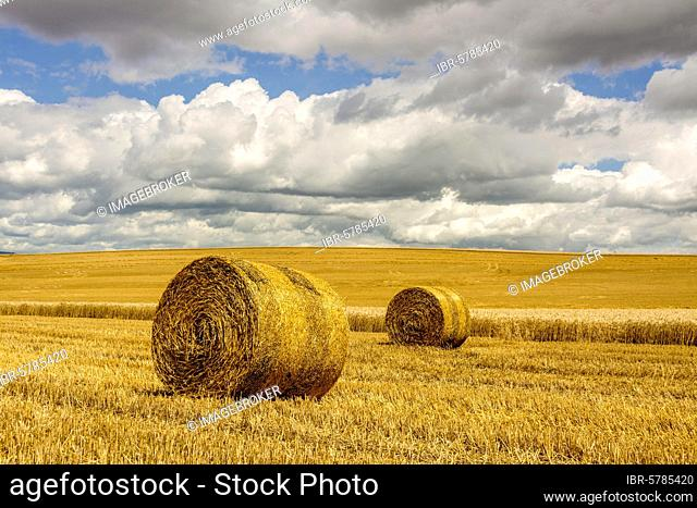 Bales of straw in harvested fields, Limagne, Puy de Dome department, Auvergne Rhone Alpes, France, Europe