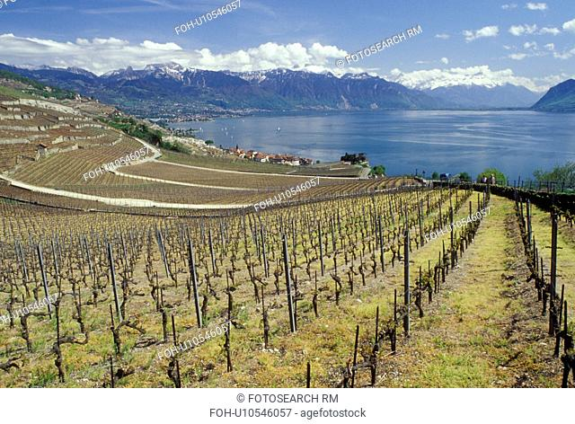 Switzerland, Lake Geneva, Vaud, Lavaux, Alps, Europe, Scenic view of the village of Rivaz surrounded by vineyards and the Alps along the lakeshore of Lac Leman...