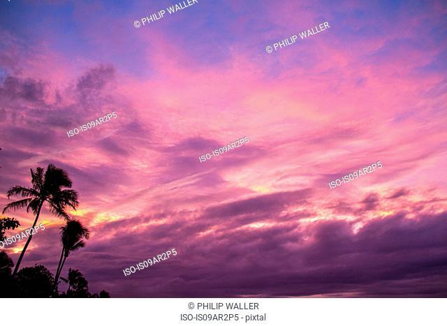 Dramatic sky and palm trees, Hawaii, USA