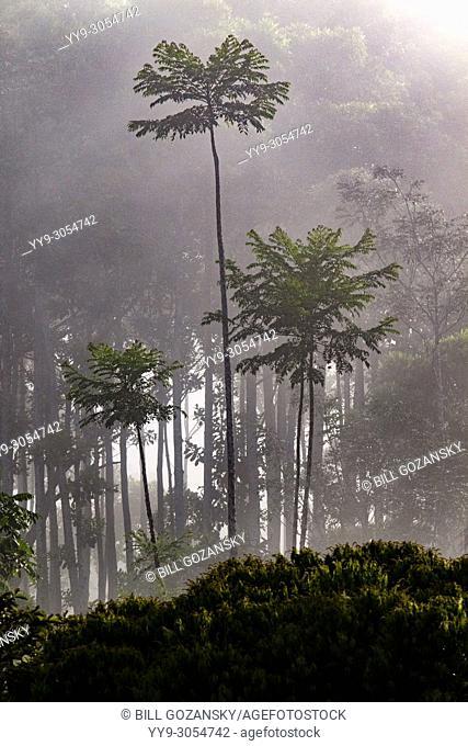Misty Rainforest Landscape - La Laguna del Lagarto Lodge, Boca Tapada, Costa Rica