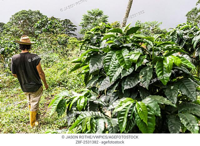 "Juan Carlos Vergara, owner of the one-man organic coffee plantation """"Mile High Coffee"""" in the Sierra Nevada de Santa Marta, Colombia"