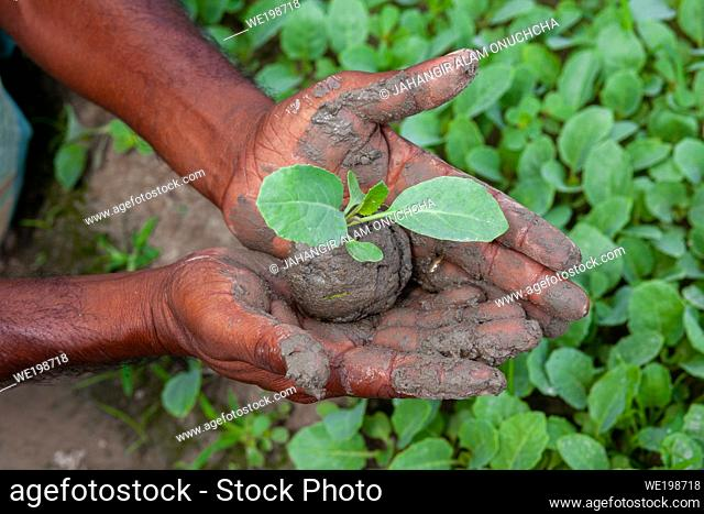 Two muddy hands are holding a small green plant. Plant in hands. Green plant background. Life and Savings concept
