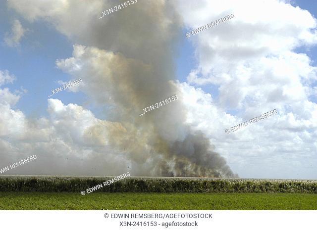 Florida, USA - Burning suger cane for harvest