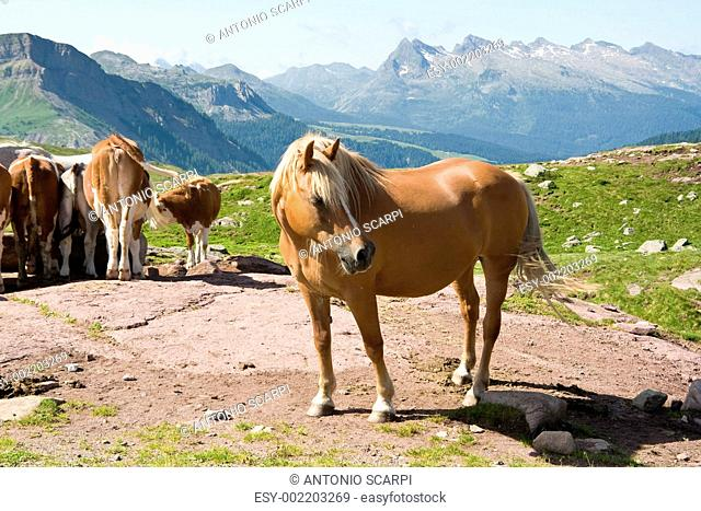 Horse and caws