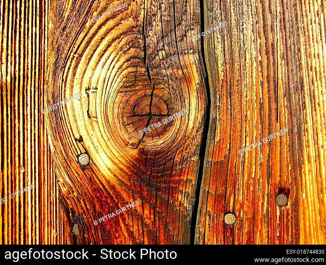 Altes Holz in der Abendsonne