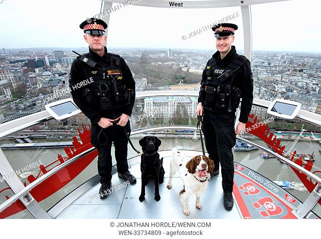 The London Eye celebrated Chinese New Year of the Dog by inviting trainee police dogs from the City of London Police on to the London Eye
