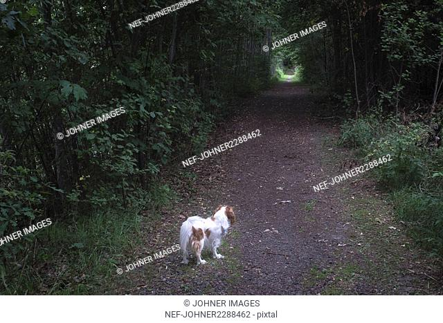 Dog on dirt track in forest