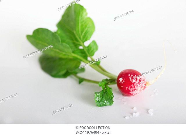 A radish with sea salt