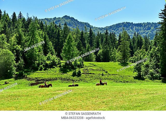 Rider on a meadow close Gasteig