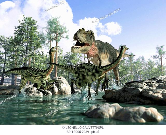 T. rex. Computer artwork of a Tyrannosaurus rex dinosaur hunting Gallimimus dinosaurs. T.rex was one of the largest carnivorous dinosaurs