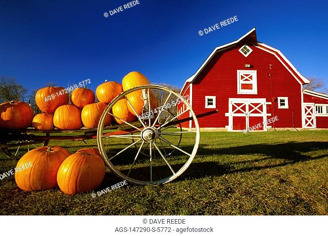 Agriculture - Pumpkins on the ground and in a wagon in the foreground with a red barn behind / Canada - Manitoba, nr. Oakbank