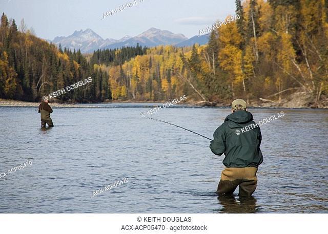 Flyfishing for steelhead, Bulkley river, Smithers, British Columbia, Canada