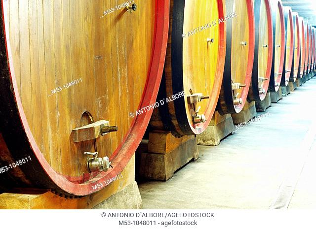 large size wooden aging barrells in a large underground winery  dugenta  province of benevento  italy  europe