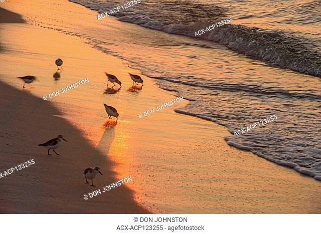 Navarre Beach on the Gulf of Mexico at dawn, Navarre, Florida, USA