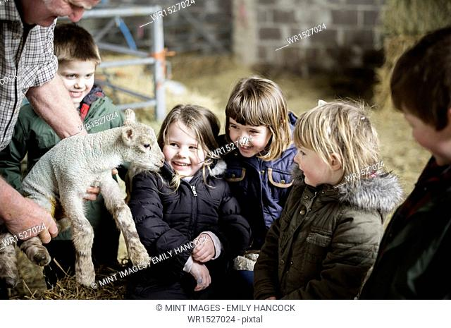 Children and new-born lambs in a lambing shed