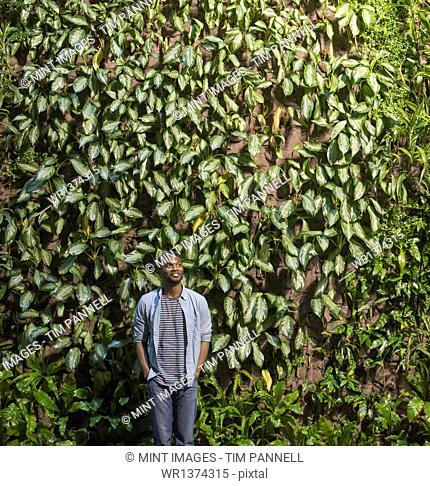 Outdoors in the city in spring. An urban lifestyle. A man looking up at a high wall covered in climbing plants and foliage