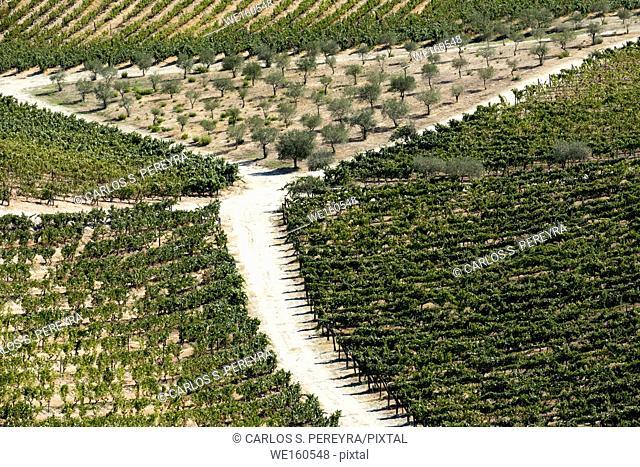 vineyards in the Douro River, Alto Douro Wine Valley