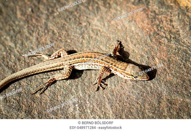 detail of a lizard