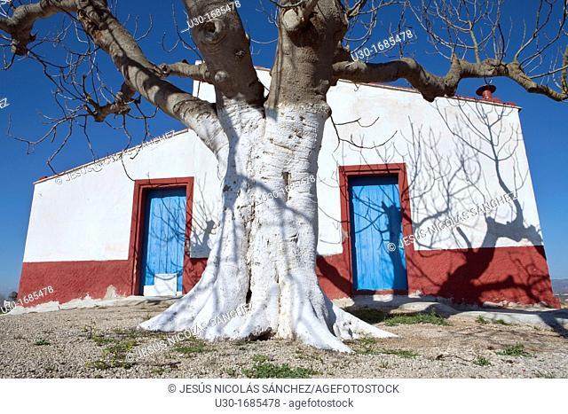 Tipic house  Delta del Ebro Natural Park, in Tarragona province  Catalonia  Spain