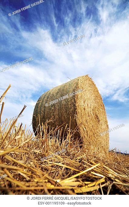 Bales of straw, Catalonia, Spain