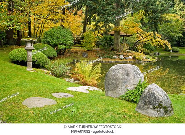 Boulders w/ ferns at pond edge; family viewing pavilion & cherry tree under Douglas-fir bkgnd, autumn (Prunus sp.; Pseudotsuga menziesii)