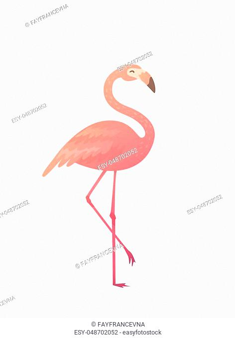 Vector illustration of a pink flamingo. Flamingo African tropical beauty of exotic animals. Sleek design simple