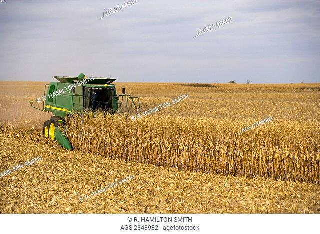 Agriculture - A John Deere combine harvests grain corn in Autumn / near Northland, Minnesota, USA