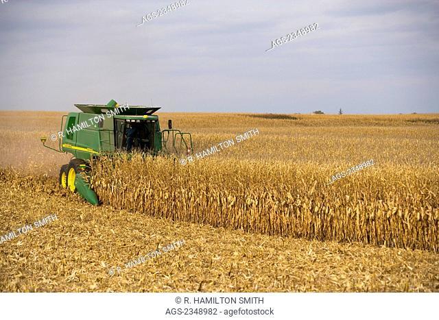 Agriculture - A John Deere combine harvests grain corn in Autumn / near Northland, Minnesota, USA