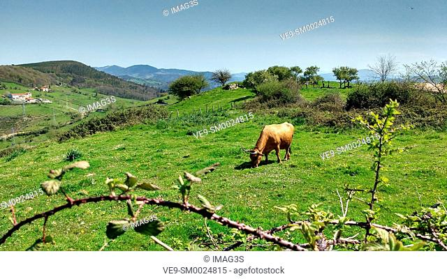 Rural landscape in El Freisnu village, Grado municipality, Asturias, Spain