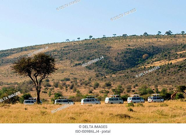 Tourists on safari, watching giraffes, Masai Mara National Reserve, Kenya