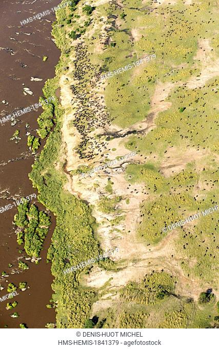Kenya, Masai-Mara game reserve, wildebeest (Connochaetes taurinus), migration herd near the Mara river, aerial view