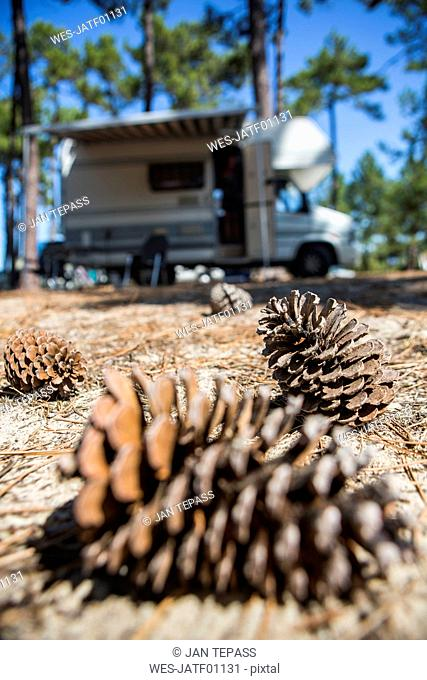 France, Gironde, pine cones on camping ground